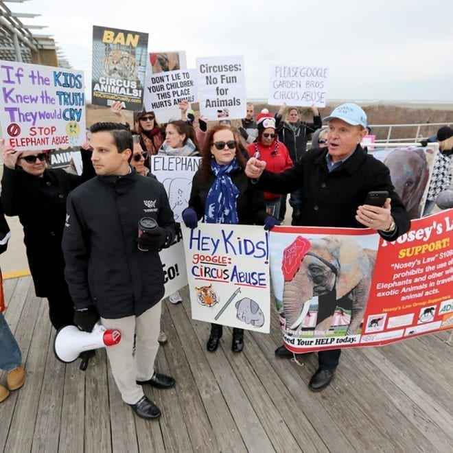 A protest by animal rights activist was joined by New Jersey State Senator Raymond Lesniak (D-20) outside  the Wildwoods Convention Center, Tuesday March 27, 2018, to protest he Garden Bros. Circus using elephants and other exotic animals in their show.  Lesniak spoke about trying to pass  Nosey's Law - S1093 / A1923, legislation against the use of wild and exotic animals in traveling animal acts. (Dale Gerhard / Press of Atlantic City)